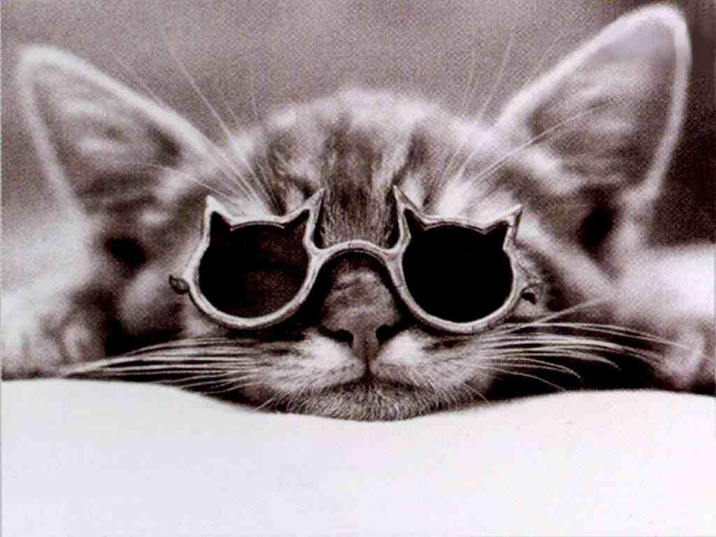 Belles photos de chats les petits chats - Images de chats rigolos ...